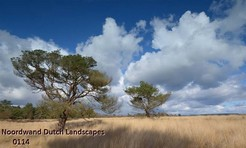 Noordwand_Dutch_Landscapes_0114_k.jpg