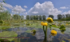 Noordwand_Dutch_Landscapes_3031_k.jpg
