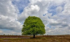 Noordwand_Dutch_Landscapes_9621_k.jpg